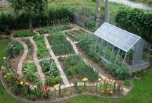 úžitková záhrada / pestovanie zeleniny,bylinky,