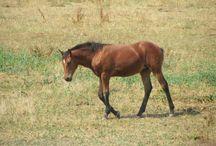 Novi (Novelle) van Haflonië ❤️ / Our sweet foal Novi 18-04-2015