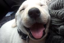 Puppy / Little cutie pies <3