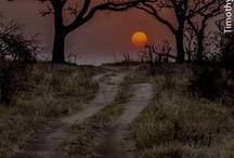 Beautiful / All things that are beautiful in my eyes  / by Stanley Kiepura