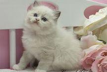 Legendoll Kitten