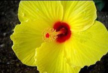 Hawaii / Beauty of Hawaii / by Lucille Long