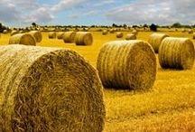 Hay Bales / Round and Square Bales of Hay #haytalk #hay