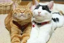 FUNNY and Cute.... Cats!