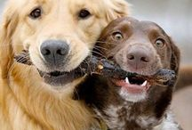 FUNNY and Cute....Dogs!