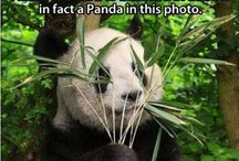 Funny animals with captions