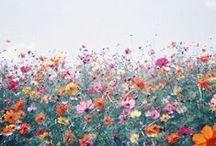 Des Fleurs ~