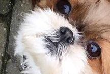 Love dogs / Louco Amor por cães fofinhos!!!