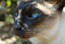 Kocecky - >^._.^< - Cats - Gatos
