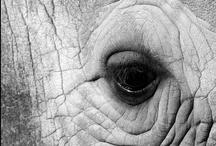 Elephants / Happiness and wisdom