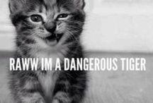 Cats ^,,^