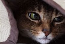 Cats❤️ / Pessoas que odeiam gatos, voltarão como ratos na próxima vida.haha / by Claudia Souza