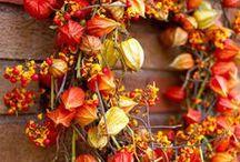 wreaths / by Sandra Padgett