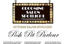 Salon Spotlight / The Groomers Salon Spotlight competition