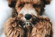 Animals / Extremely Adorable Photos of Super Cute Animals