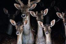 Animals - mystical, wild, magical