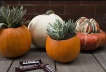 FALL ENTERTAINING / Seasonal Tablescapes and At-Home Entertaining Ideas