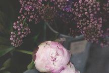Prints // Floral