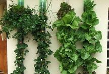 APARTMENT AGRICULTURE / The best of indoor or small-space herbs, fruits and plants.