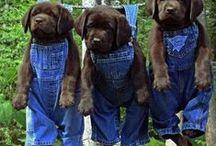 •●• Blue :: Country :: Farm  •●•