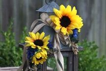 •●• Sunflowers @ Home •●•