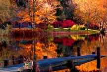 •●• Autumn Leaves •●•