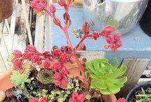 Plants! / by Tarrah Lemos