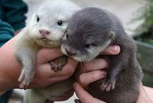 You otter know / All things otter