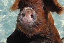 LITTLE PIG / by Grazia Merlo