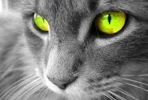 "For the Love of Cats / ""The smallest feline is a masterpiece"" Leonardo da Vinci"