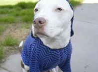 Warm Clothes for Big Dogs / Winter hats, knit booties, warm coats in big sizes for large breed dogs