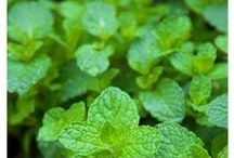Cooking With Fresh Herbs / Add flavor to your recipes with fresh herbs