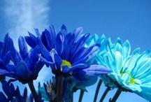 Blue - my favorite color