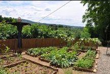 Garden Like a Guru
