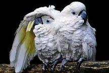 Cute birds / by Jessica Aponte