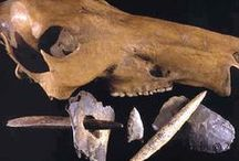Paleo-Indian Artifacts / Identification of