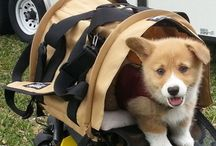 SturdiBag / Friendly pets featuring our original and best selling product the Sturdi Bag!