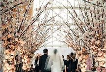 Wedding / by meg mandell