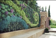 Verticle Gardens - Gardens That Go Up / Make a statement with a garden that goes up.  Becoming more and more the trend, verticle gardens give you the opportunity to turn a dull wall into a living masterpiece.  I take time to create amazing boards for your enjoyment. Please show me your appreciation by following me and my boards!