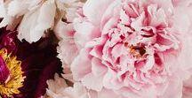 Flowers / Die schönsten Blumen-Arrangements