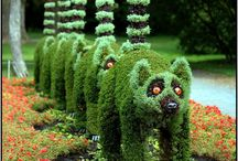 Garden/Plants / All that is green and fabulous