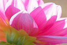Flowers / Beautiful blooms make my heart smile.