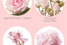 nazwy kwiatów