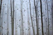 Természetfotók - Nature photos