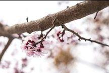 Invierno 2015 / Naturaleza y animales. El invierno se retira lentamente para dar paso a la exuberante primavera.