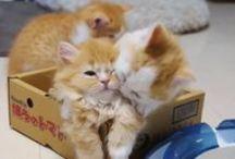 Animal Love / Lovely GIFs & Videos ❤️