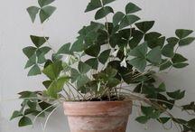Grünzeug / Alles was daheim wächst und grünt