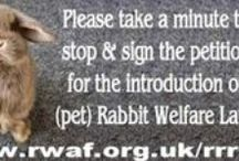 Rabbits Require Rights (Scotland) / raise awareness and provide education alongside offering advice & support towards the betterment of (pet) rabbit welfare by promoting RWAF beliefs, standards & educational information.