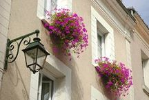 Window Boxes / by Vanessa Sheppard
