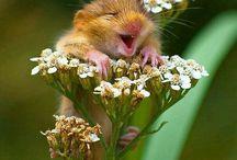 Onze vriendjes / De gekste selfie's van dieren'! ...omdat het zulke leuke vriendjes zijn :)